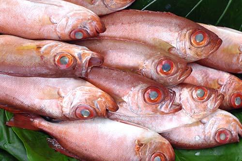 生鮮食品,生鮮魚類,生鮮魚貨,鮭魚,鱈魚,土魠魚,鯖魚